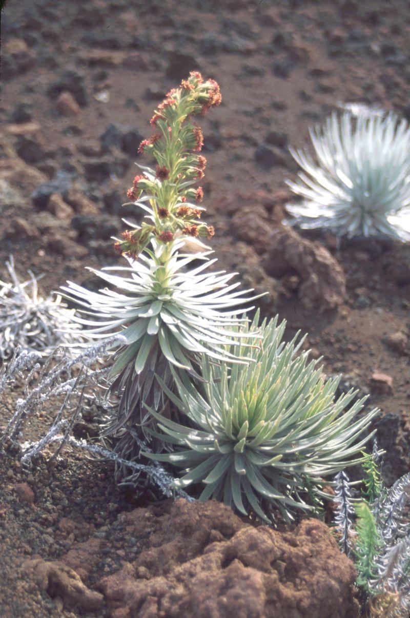Hybrid_in_flower_1