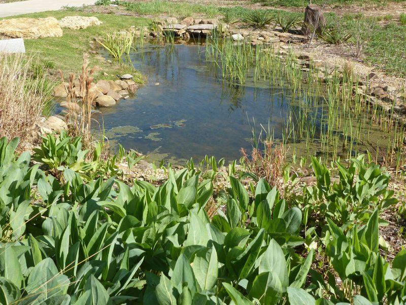 IC pond