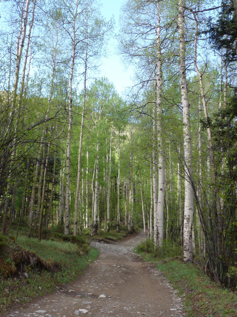 Pioneer Creek trail - aspens