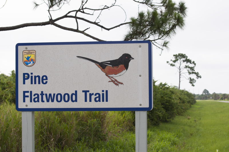 Pine_flatwood_trail